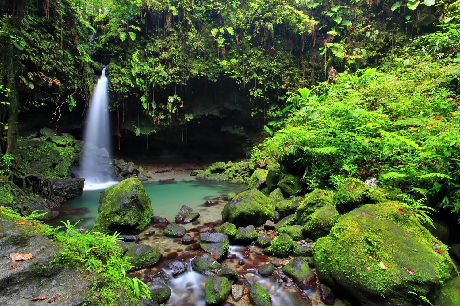 Pristine, mineral-rich water, clean forest air, and the embrace of nature — Dominica's Emerald Pool offers natural therapy for body and soul. Photo by Emperorcosar/Shutterstock.com