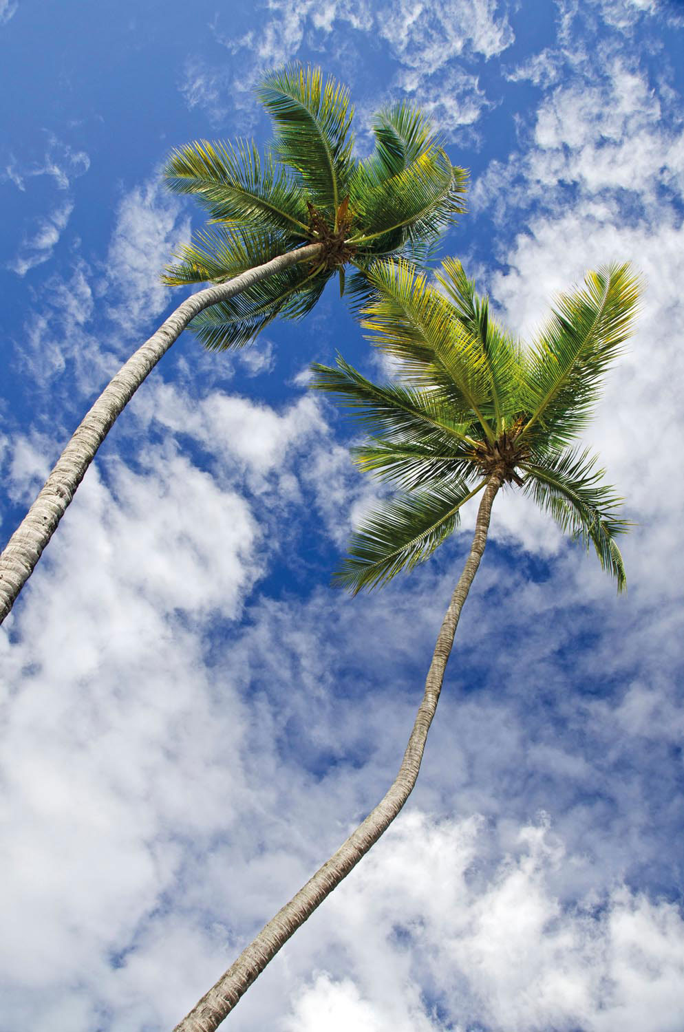 . . . and up at the brilliant blue sky. Photo by F1online Digitale Bildagentur GMBH/Alamy Stock Photo