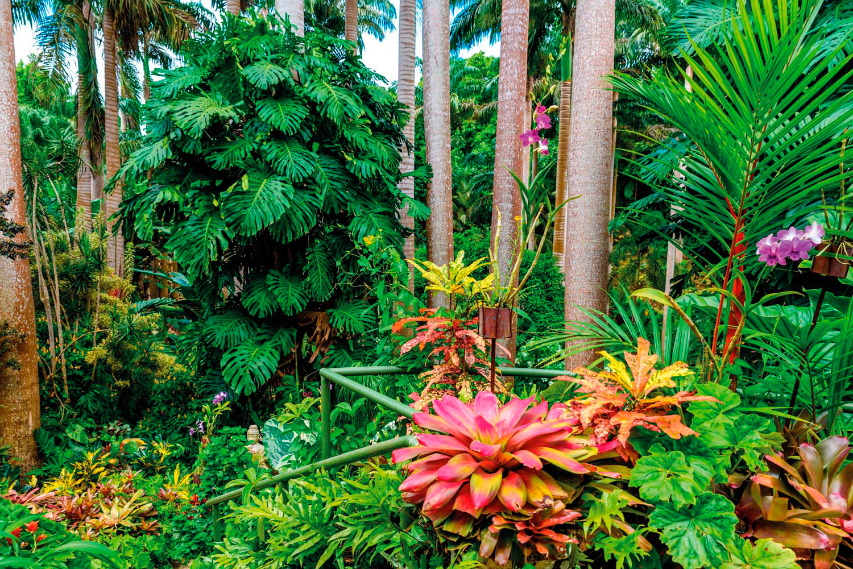 A profusion of tropical flora at Hunte's Garden. Photo by Simon Dannhauer/Shutterstock.com