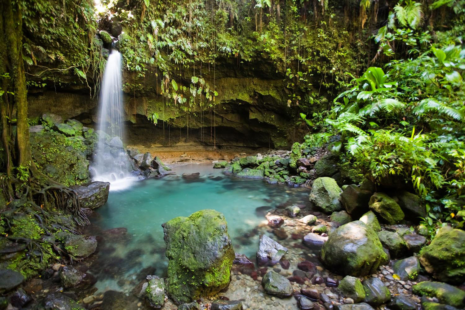 Emerald Pool, one of Dominica's natural gems. Photograph by Paulzizka/iStock Photo
