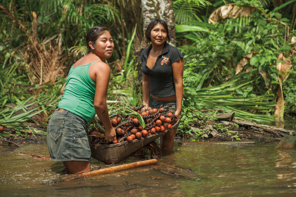 Marin Aj Aj and Rarissa Tujase harvest fruit from the maurisie palm (Mauritia lexuosa), known locally as koi. The fruit is eaten or used for its juice, while the leaves of the palm are used for roof construction. Photography by Milton Kam