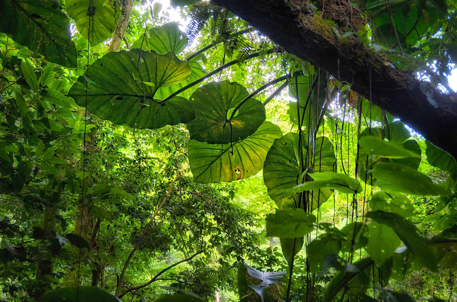 The lush forest of north Montserrat. Photo courtesy Montserrat Tourism Division