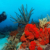 Tobago's waters, teeming with life, are a diver's paradise. Photograph by Imagebroker/Alamy Stock Photo