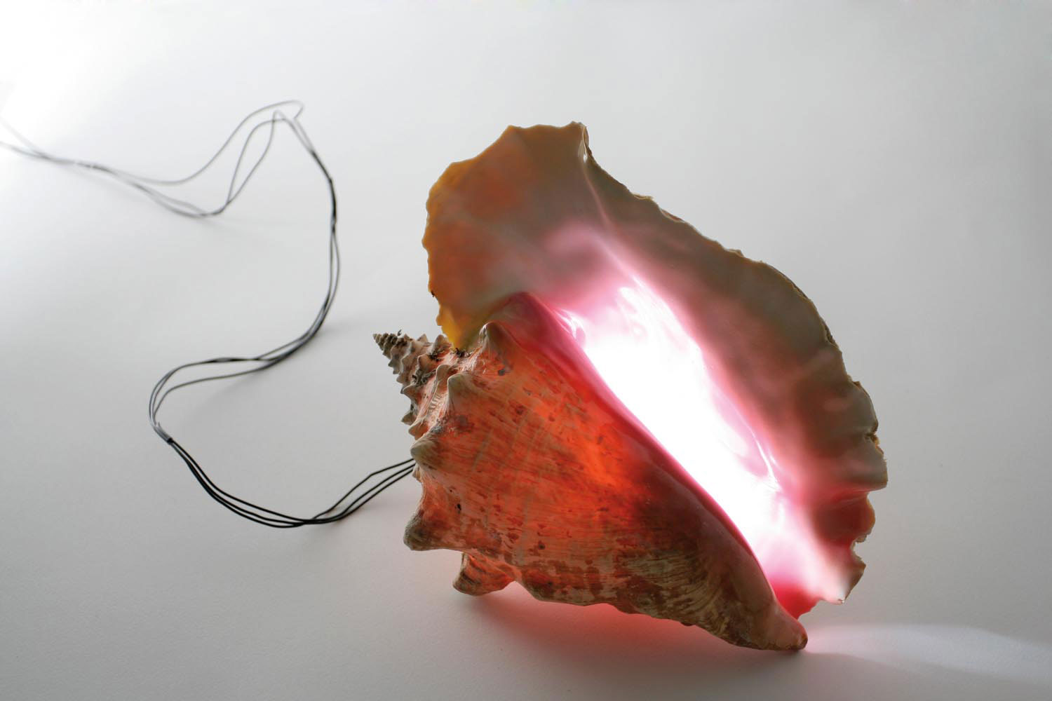 Untitled, strobe light, conch shell (2009). Photo courtesy Blue Curry