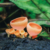 """A neon-hued orange cup fungus (Cookeina sp.) along a trail on Mt Bleu, a peak in the Northern Range near the village of Brasso Seco. """"I spend a lot of my time in the forest,"""" says Brendan Delzin. """"Green is the most dominant colour, so when I see som"""