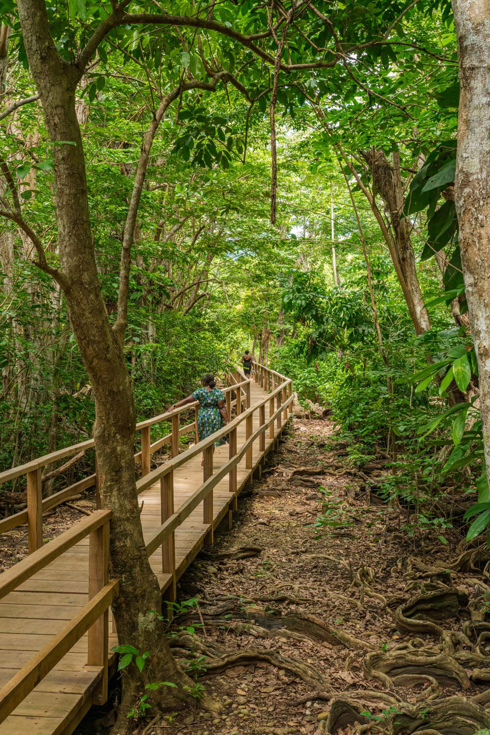 A boardwalk on the Indian River Trail. Photo courtesy Discover Dominica Authority