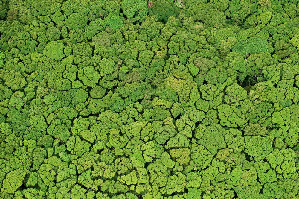 From the vantage-point of a small aircraft, Guyana's rainforest stretches as far as the eye can see. Photo by Pete Oxford
