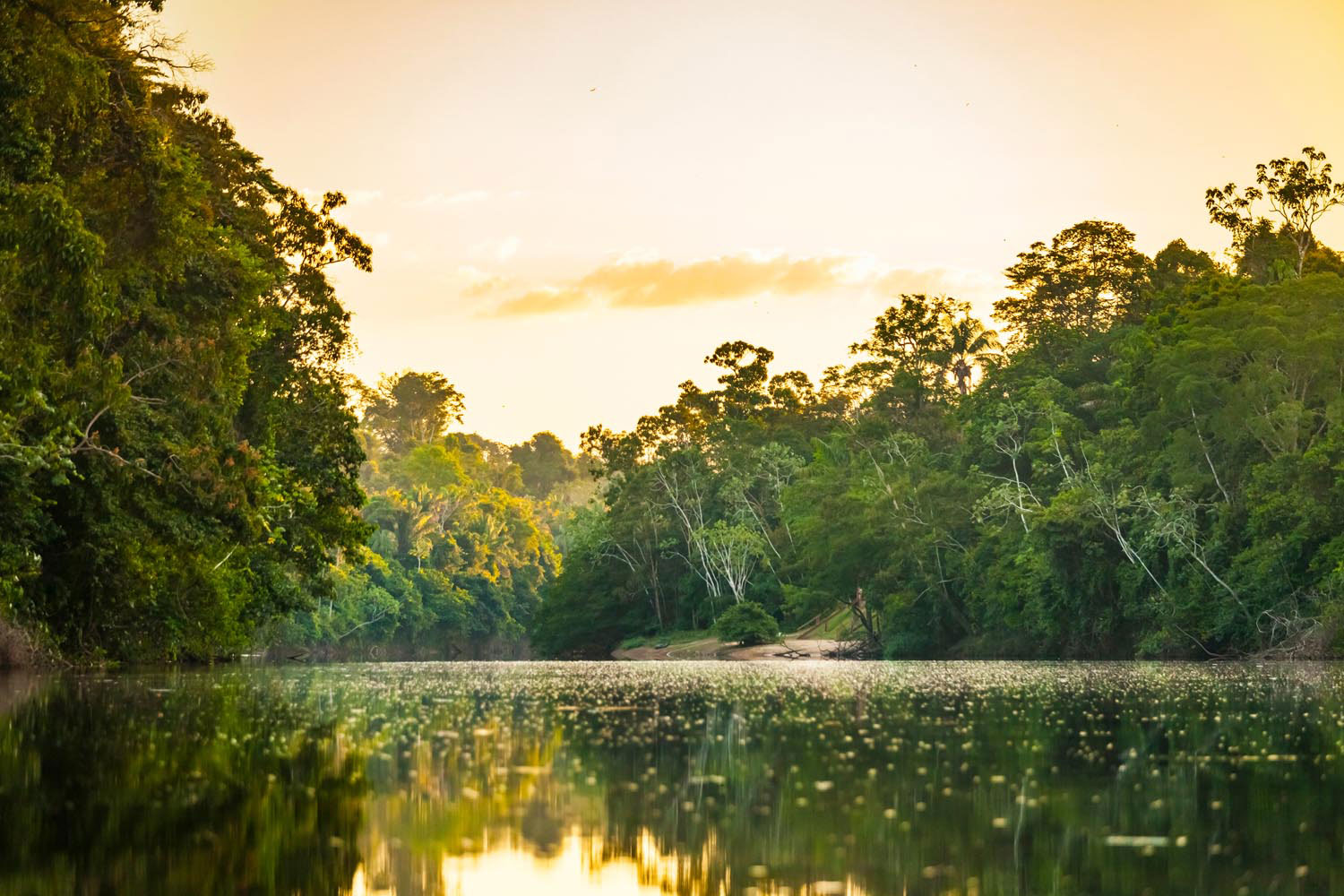 Suriname's interior is an unspoiled landscape of mountains, savannahs, forests, and rivers. Marcel Bakker/Shutterstock.com