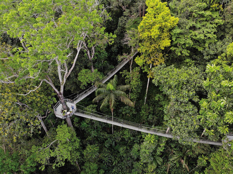 The canopy walkway near Iwokrama's Atta Lodge. Photo by David Di Gregorio