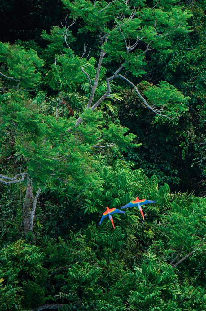 Guyana's vast rainforests are home to hundreds of bird species and other extraordinary wildlife. Photo by Pete Oxford