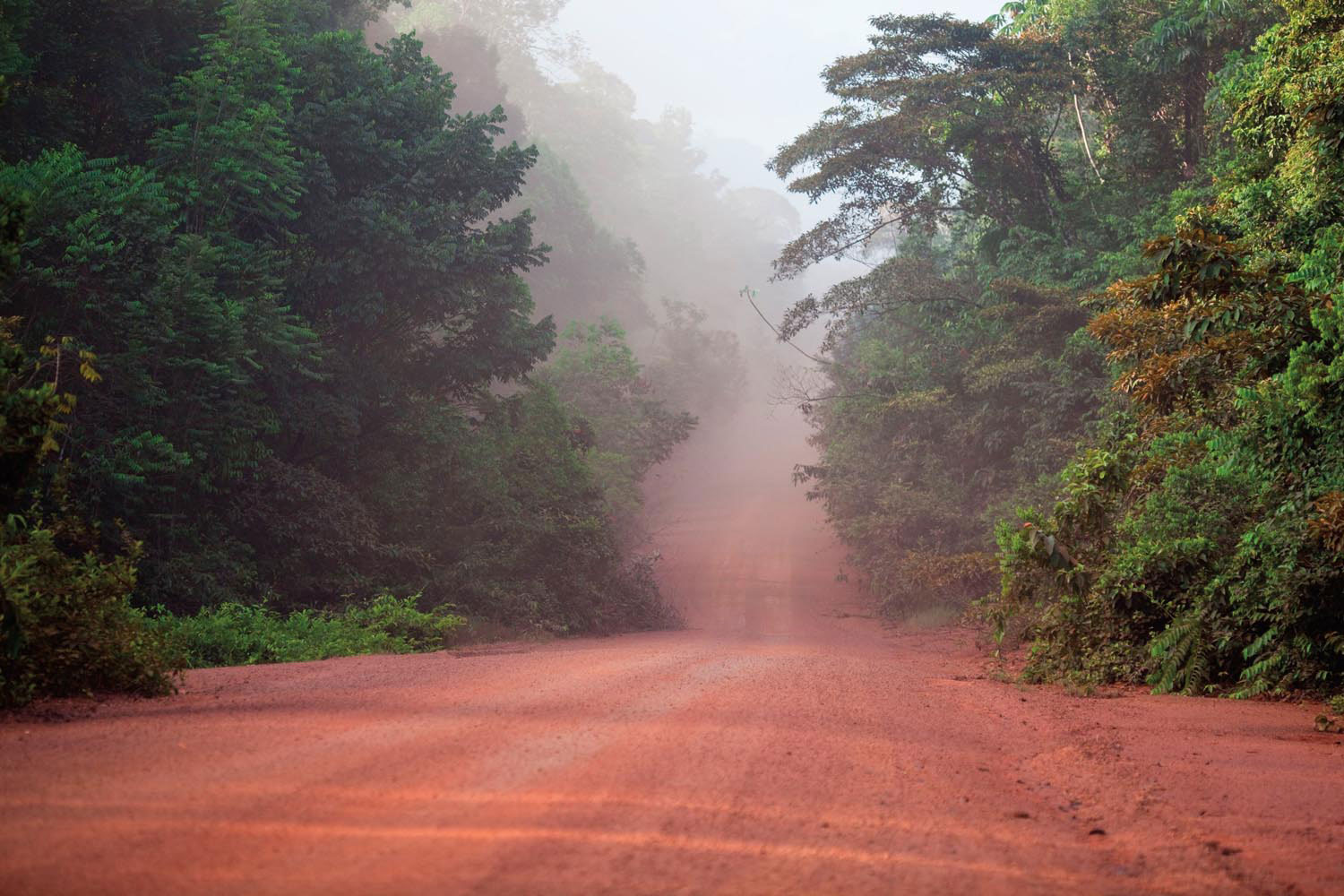 The unpaved Linden-Lethem road cuts through the Iwokrama Forest. Photo by Joe Blosson/Alamy Stock Photo