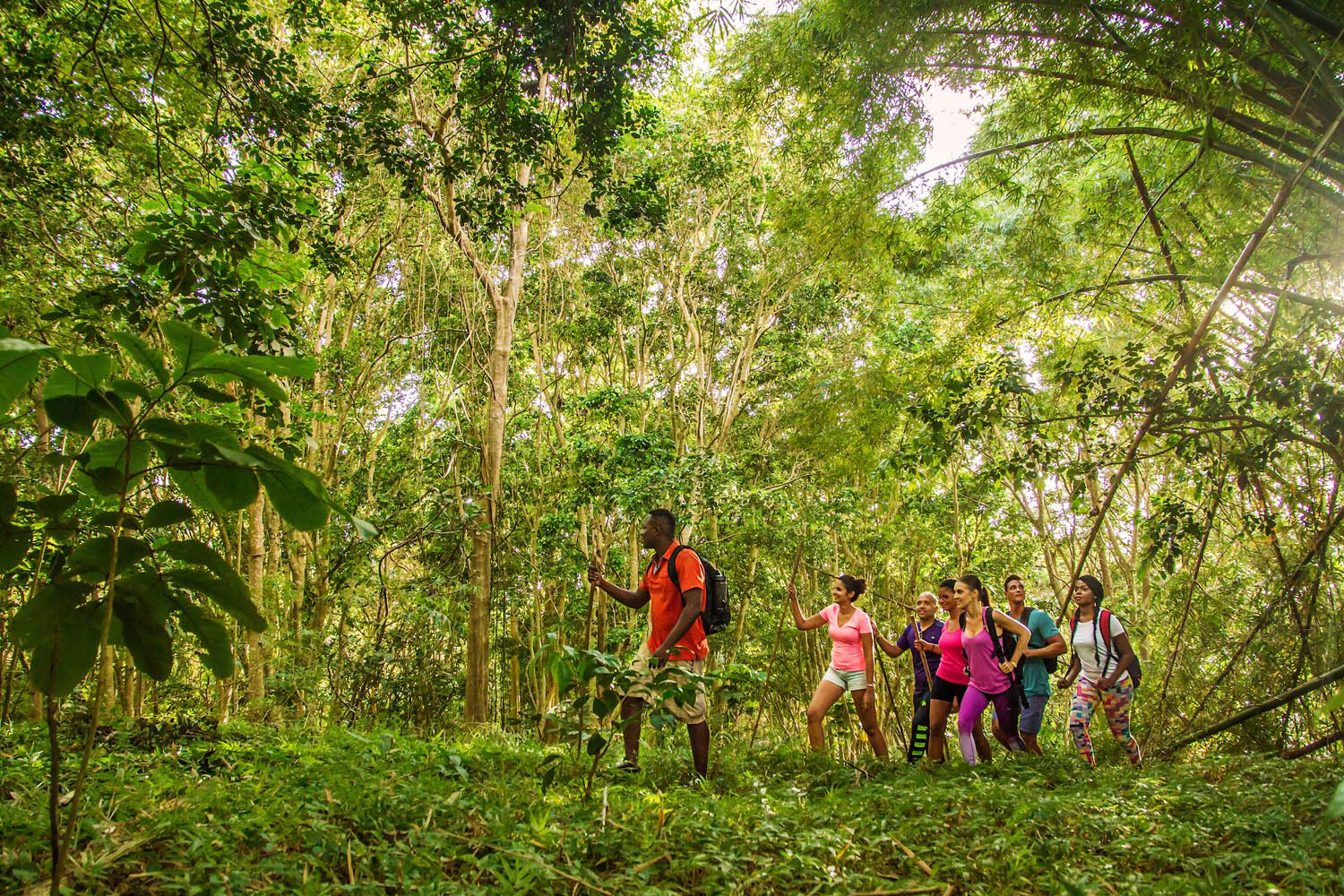 Exploring a stretch of forest in the interior of Barbados. Photo courtesy Barbados Tourism Marketing Inc