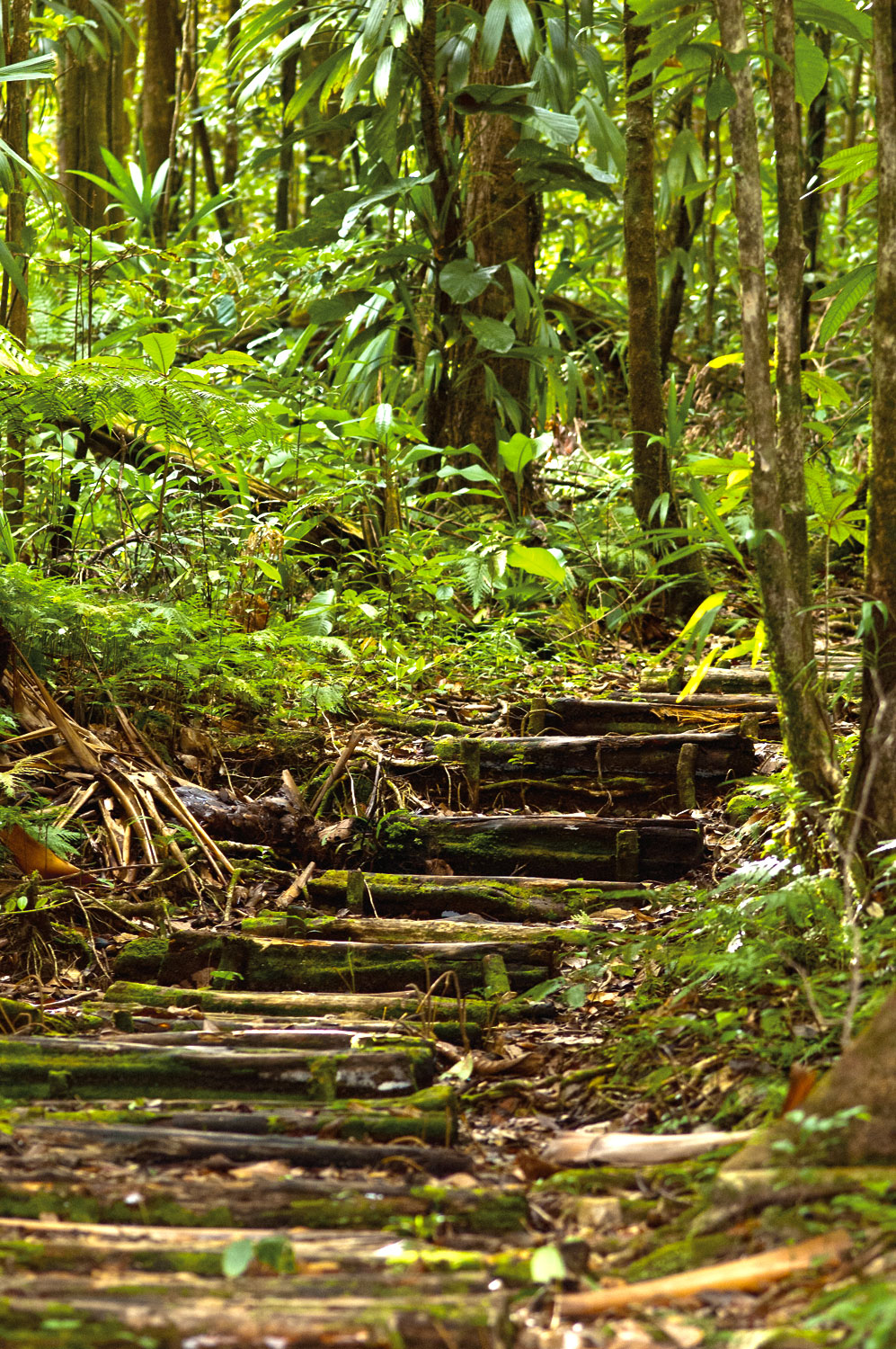 One of the gentler inclines on the Waitukubuli National Trail. Photograph by Images Dominica