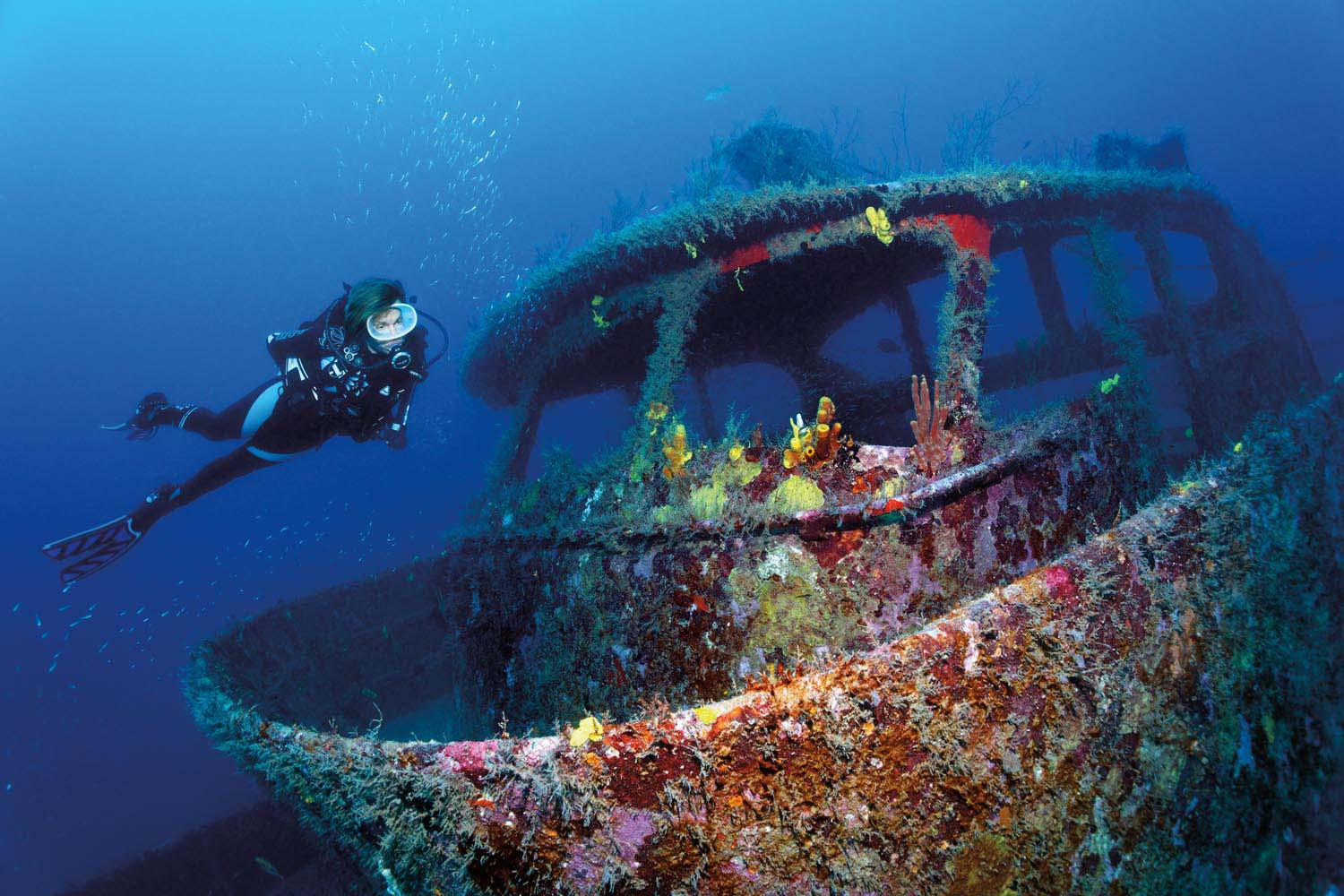 Exploring a small wreck off Speyside. Photo by Imagebroker/Alamy Stock Photo