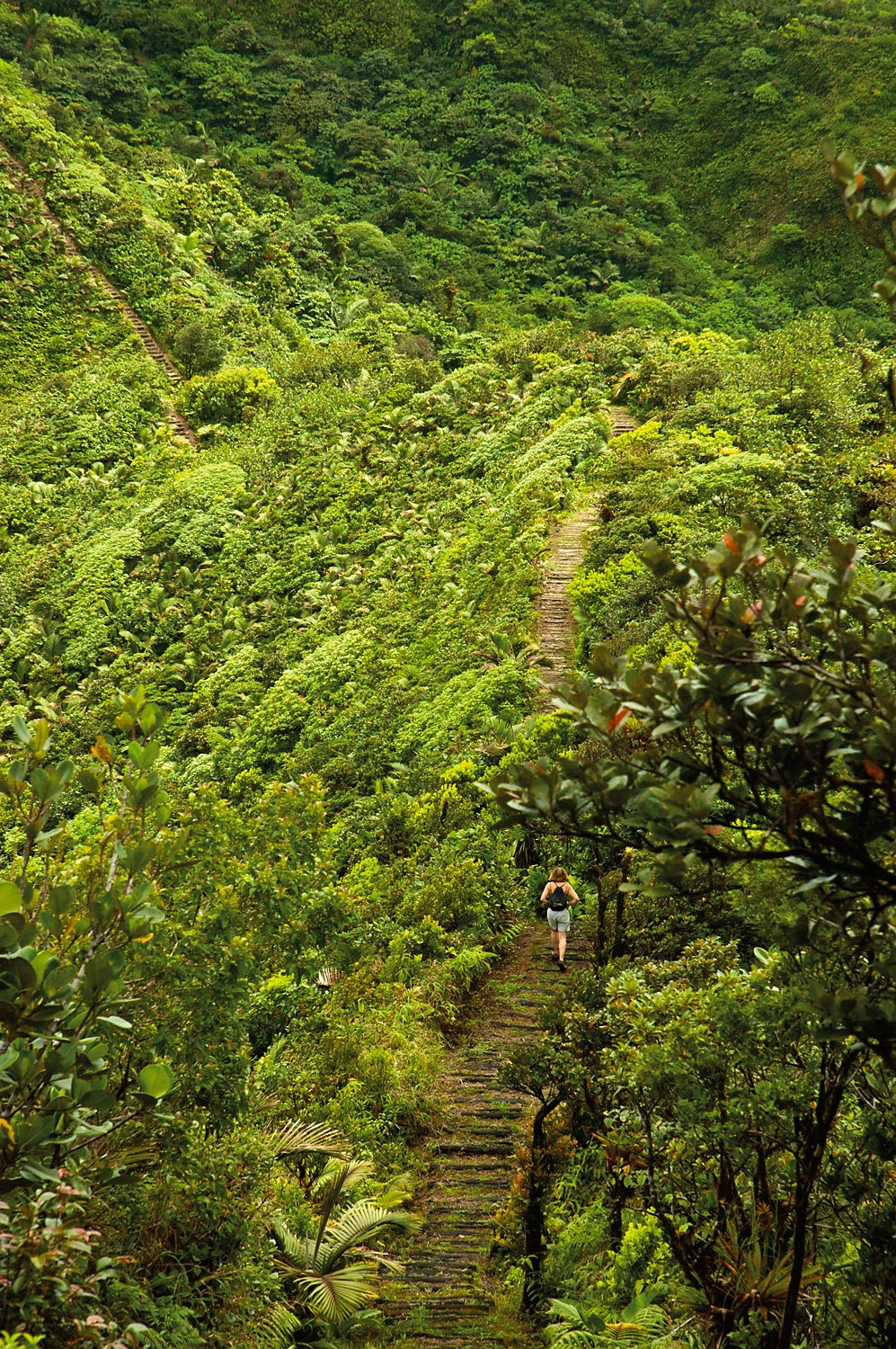 Much of the trail is built on old footpaths used to get around Dominica before paved roads. Photograph by Images Dominica