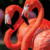 A pair of flamingos bask in the afternoon sun. Photo by Pawlopicasso/Alamy Stock Photo