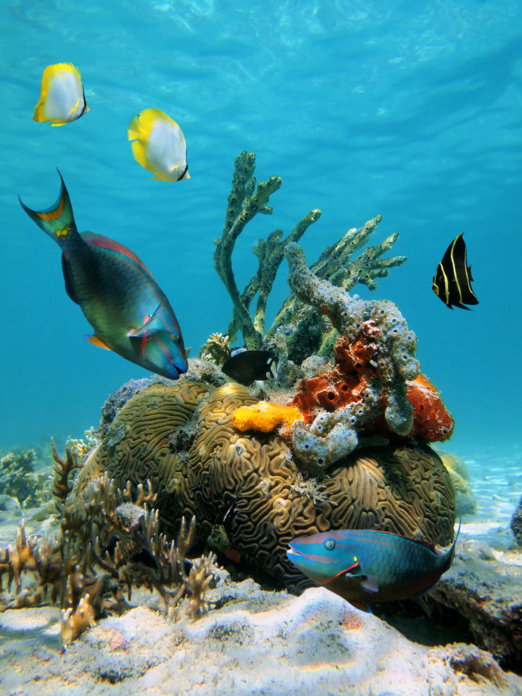 Parrotfish species bring vibrant colour to coral reefs — and help keep them healthy, too. Photo by Damsea/Shutterstock.com