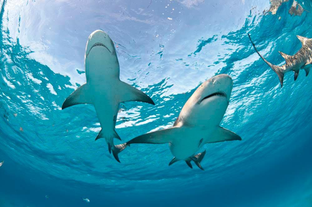 Photo by Fiona Ayerst/Shutterstock.com