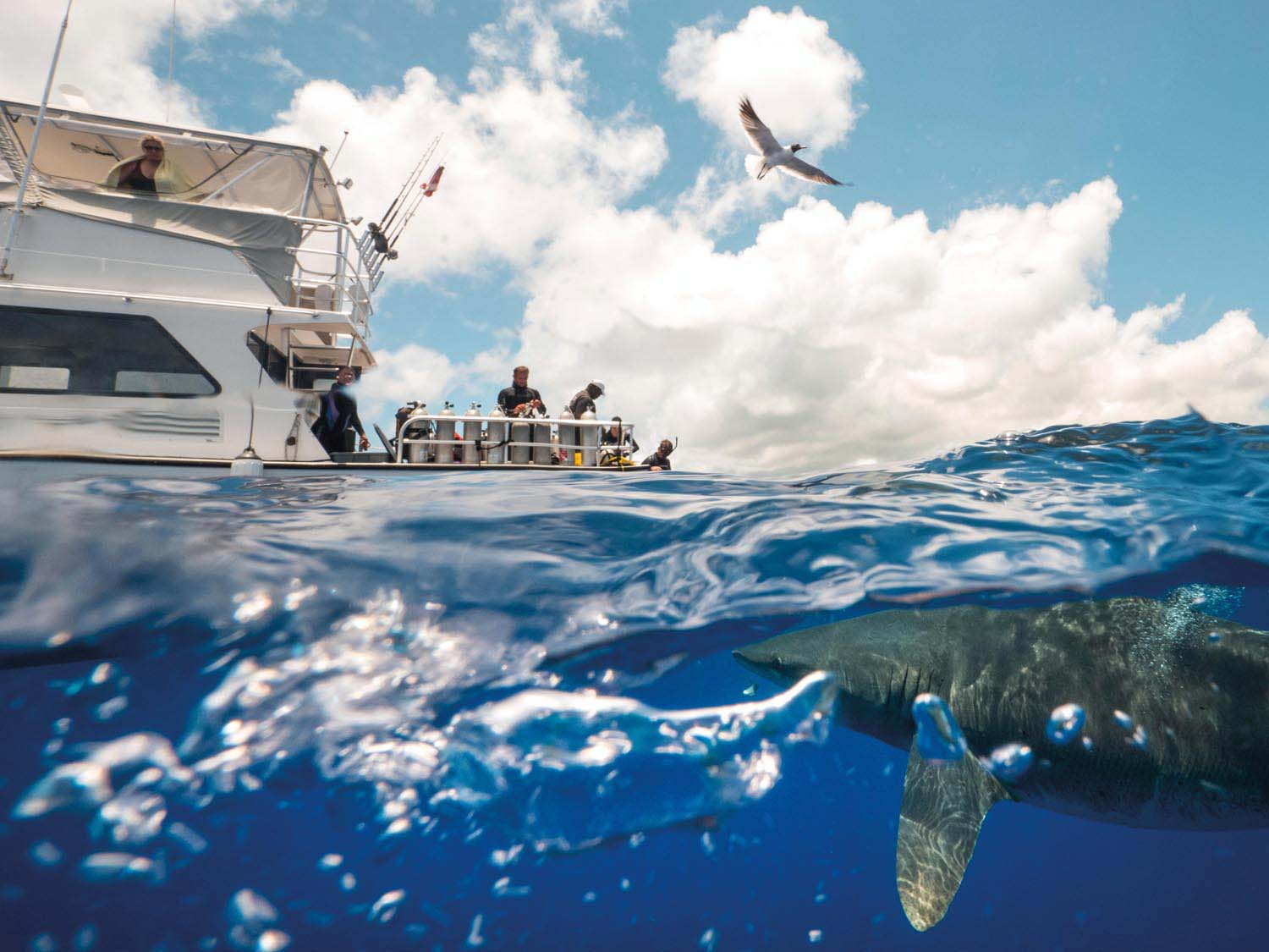 Near the centre of the Bahamas archipelago, Cat Island boasts the country's highest point, Mount Alvernia, all of 207 feet above sea level — and is one of the best places in the world to experience a close encounter with the rare Oceanic Whitetip Shark, via a dive tour. Photo by Christopher Parsons/Alamy Stock Photo