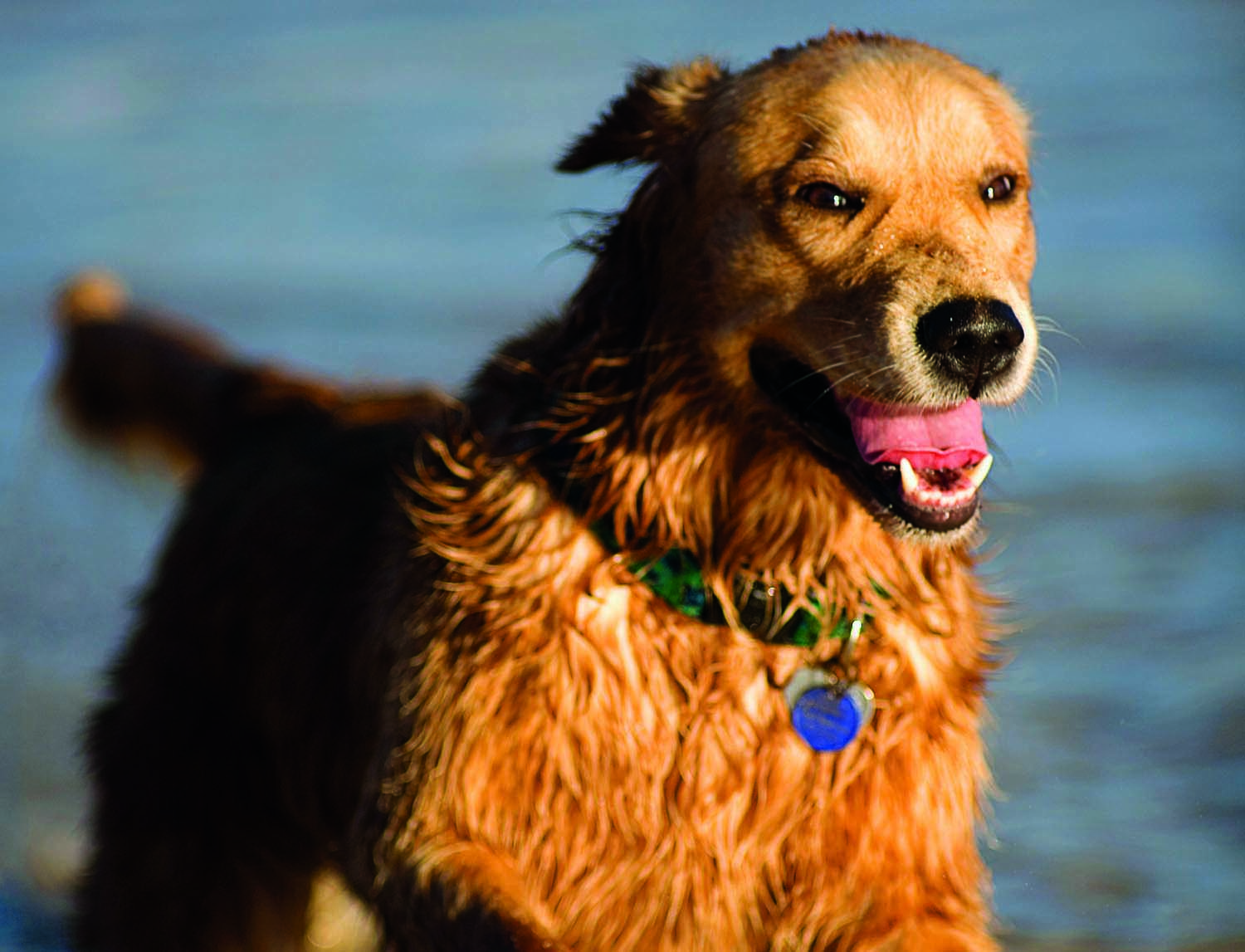 When disasters like last year's Hurricane Dorian strike, human victims are the priority — but animal welfare activists say pets shouldn't be forgotten. Photo by Design Pics Inc/Alamy Stock Photo