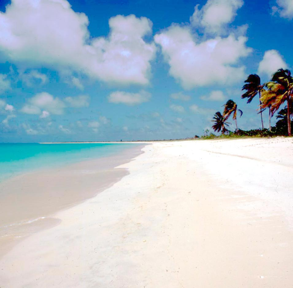 Barbuda's Palm Beach. Photo by Nicole Mouck