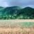 Antigua pastureland. Photo by Allan Aflak