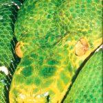 Seeking The Green Antilles: Caribbean Eco Adventures