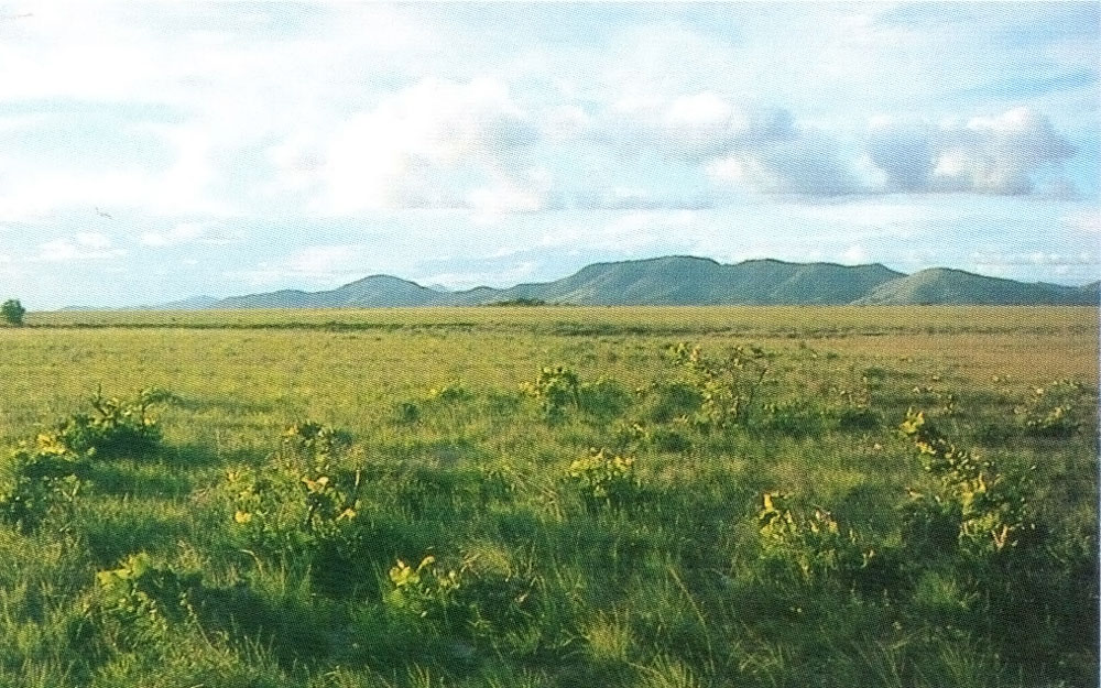 … but the great expanse of the Rupununi Savannah shows another side of Guyana's natural beauty. Photograph courtesy the Tourism and Hotel Association of Guyana