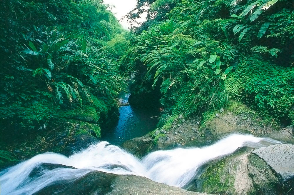 Grenada's lush forests are fed by its rich volcanic soil. Photograph courtesy Grenada Board of Tourism