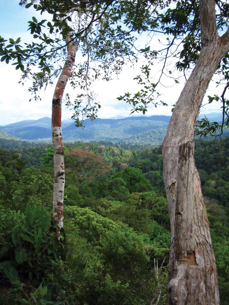 West of Surama, the Pakaraima Mountains stretch ridge by ridge to the border with Brazil. Photo by Nicholas Laughlin