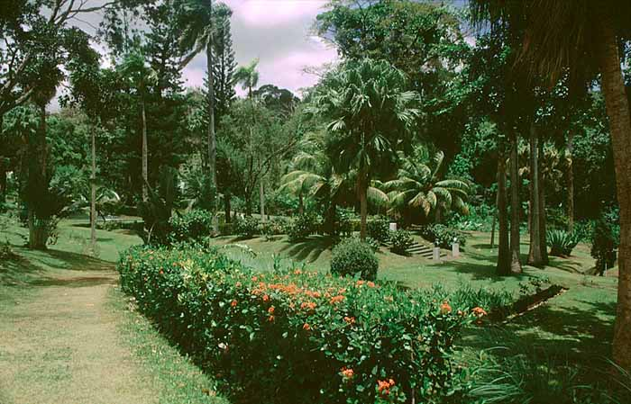 St Vincent's Botanical Gardens are the oldest in the Western Hemisphere. Photograph by Roberta Parkin