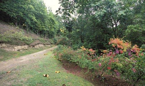 Mamiku Gardens in Praslin. Photograph by Mark Lyndersay