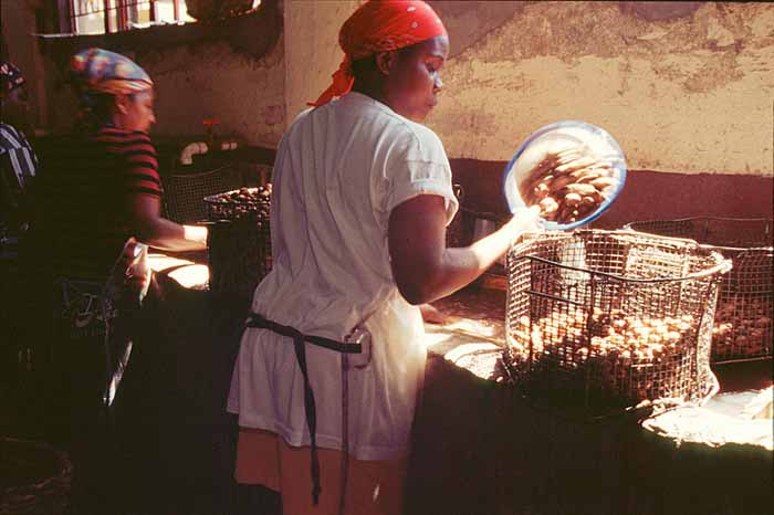 Nutmeg is largely still processed by hand in Gouyave and Grenville. Photograph by Roberta Parkin