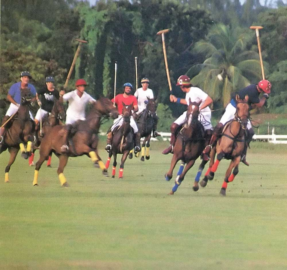 Polo at Holders. Photograph by Eleanor Chandler