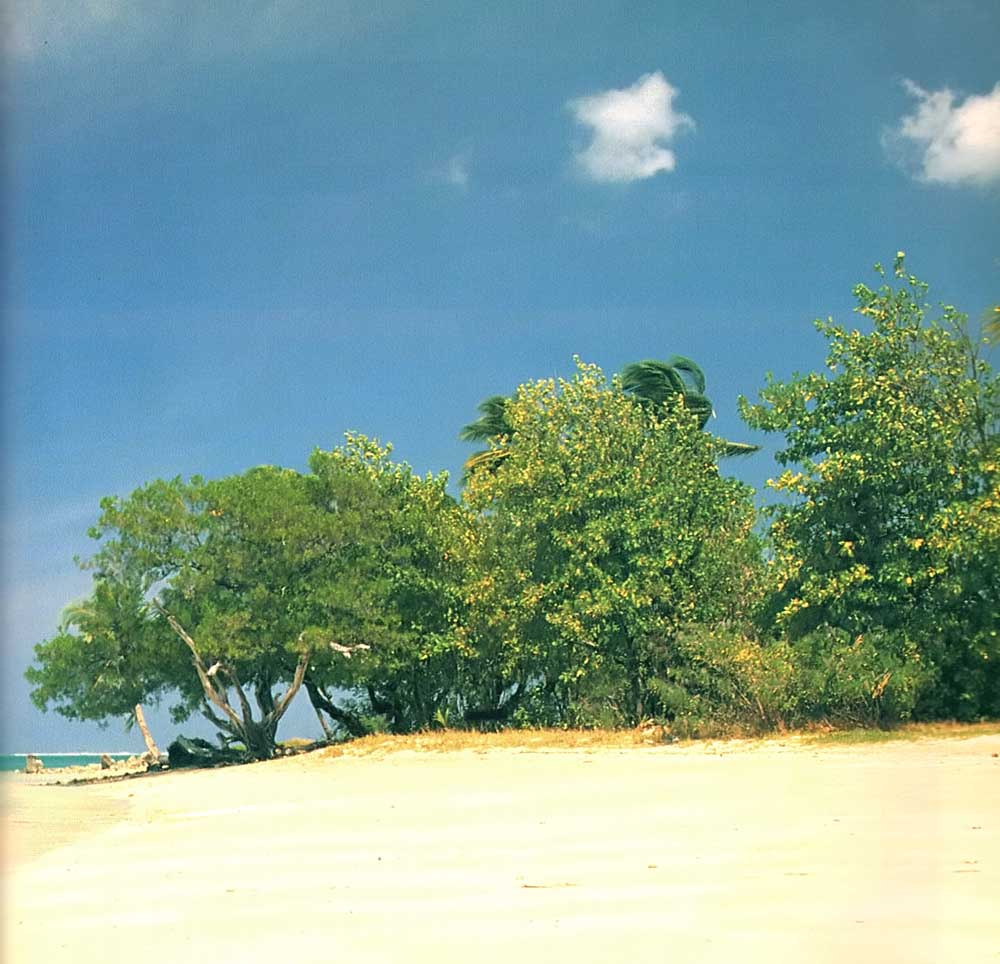 No Man's Land, Tobago. Photograph by Bruce Anton