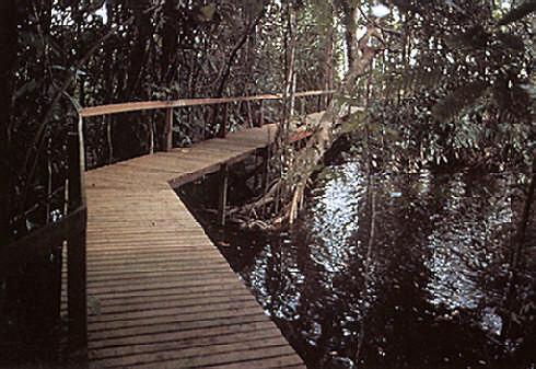 Raised nature walk at Guyana's Gazebo Resort