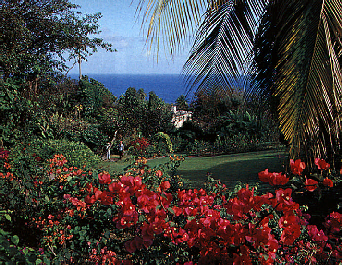 The view from the bougainvillea garden towards the Atlantic. Photograph by Felix Kerr