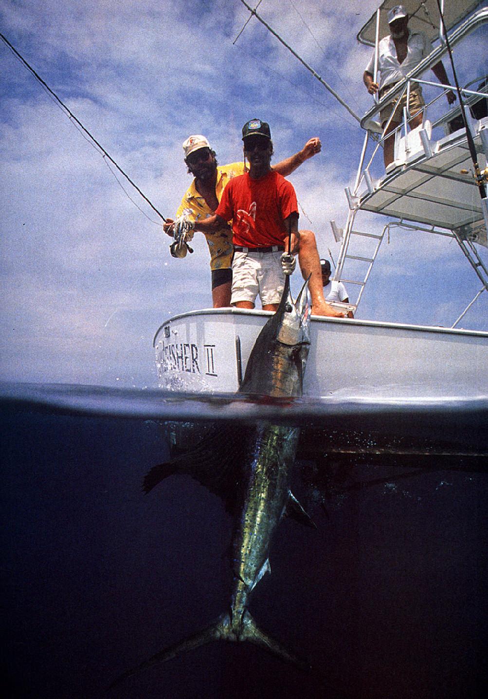 Spoils of the hunt: Caribbean sailfish. Photograph by Darrell Jones