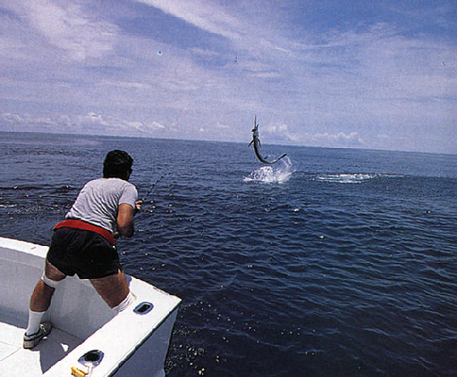 A sailfish leaps high above the water in the struggle to break free. Photograph by Darrell Jones