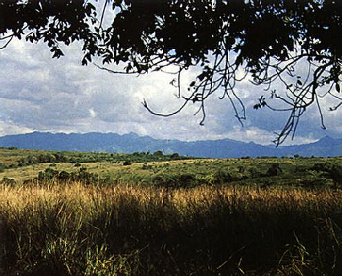 Savana and sierra. Photograph by Juliet Barclay