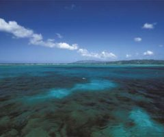 Buccoo Reef is Tobago's most famous undersea location. Photograph by Mike Toy