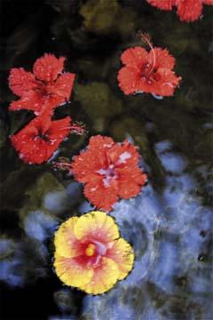 Photograph by Seandrakes.com