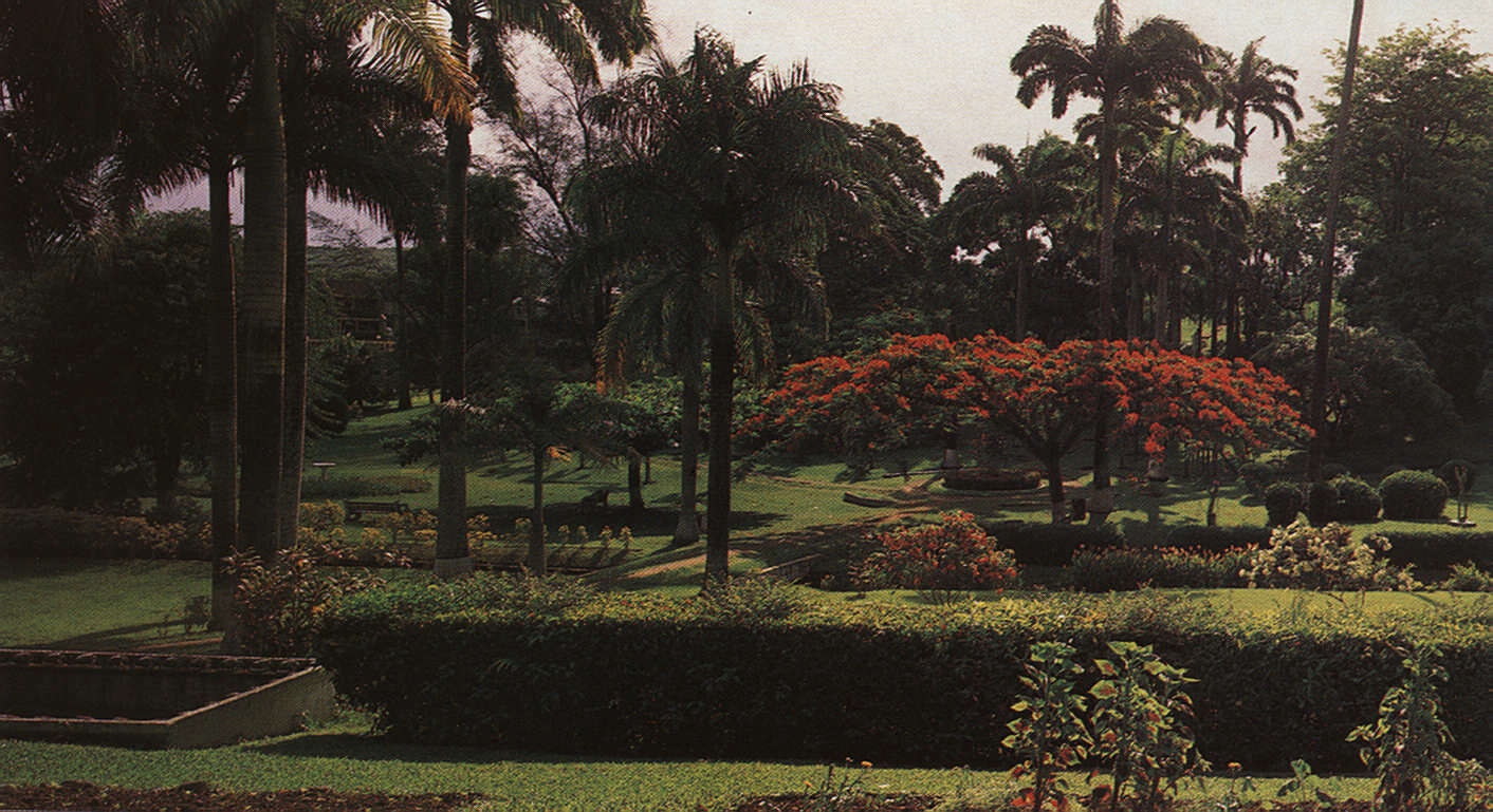 "The Botanic Gardens. ""Tobago is greenest in July and August, the heart of her rainy season; but even on the wettest day the sun still shines."" Photograph by Noel Norton"