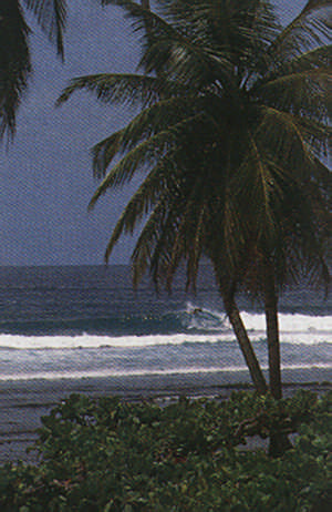 Toco, on Trinidad's north coast. Photograph by Allan Weisbecker