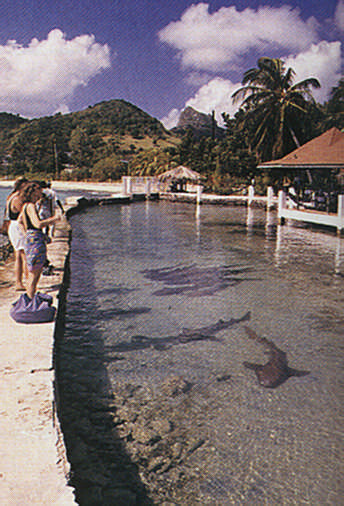 Shark Pond at the Anchorage Yacht Club on Union Island. Photograph by Chris Huxley