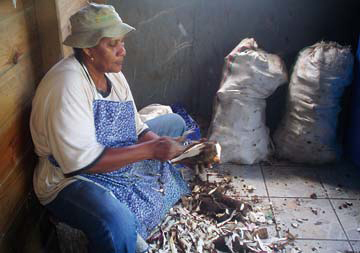 An employee at Pilas Kassav peels cassava, which is then processed to make farine. Photograph by Laura Dowrich- Phillips