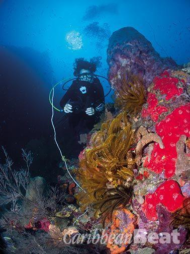 Diver's delight. Photo courtesy images Dominica www.imagesdominica.com