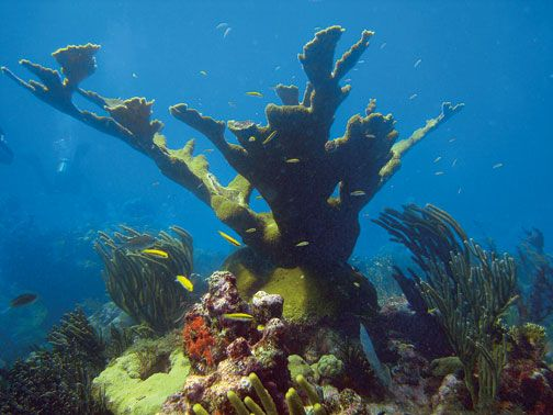 Coral Gardens dive site. Photograph courtesy Indigo Divers