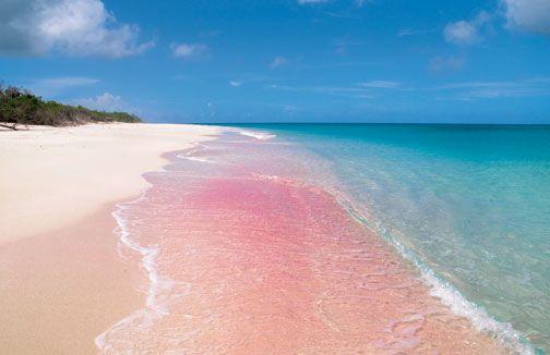 Barbuda's incredible pink sand beach. Photograph courtesy Antigua and Barbuda Tourism Authority