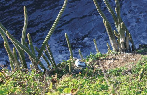 The tropicbird's inhospitable nesting environment. Photograph by Nyla Singh